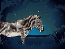 Με ραβδώσεις στο δάσος τη νύχτα διανυσματική απεικόνιση