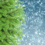 Με το δέντρο και το χιόνι έλατου Στοκ Εικόνα
