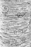 Μηνύματα αγάπης που χαράζονται στο δέντρο στην πάροδο εραστών ` s, πράσινη θέση κληρονομιάς αετωμάτων Στοκ φωτογραφία με δικαίωμα ελεύθερης χρήσης