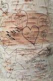 Μηνύματα αγάπης στα δέντρα στην πάροδο Lover's, πράσινη θέση κληρονομιάς αετωμάτων Στοκ Εικόνα