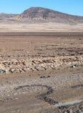 Μηνύματα στην έρημο στοκ εικόνες