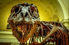 Μηνύστε το τ-Rex Στοκ εικόνα με δικαίωμα ελεύθερης χρήσης
