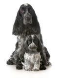 Μητέρα και κουτάβι σκυλιών Στοκ Φωτογραφία