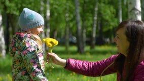 Μητέρα και κόρη που συλλέγουν τις κίτρινες πικραλίδες απόθεμα βίντεο