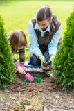 Μητέρα και κόρη που φυτεύουν τους βολβούς τουλιπών Στοκ φωτογραφία με δικαίωμα ελεύθερης χρήσης