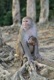 Μητέρα και μωρό πιθήκων στοκ φωτογραφία με δικαίωμα ελεύθερης χρήσης