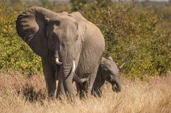Μητέρα και μόσχος ελεφάντων Στοκ φωτογραφία με δικαίωμα ελεύθερης χρήσης