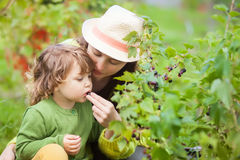 Μητέρα και παιδί που τρώνε τη μαύρη σταφίδα Στοκ εικόνα με δικαίωμα ελεύθερης χρήσης