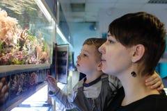 Μητέρα με τα ψάρια προσοχής γιων στοκ εικόνες