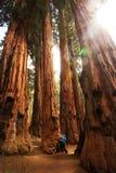 Μητέρα με Sequoia επίσκεψης νηπίων το εθνικό πάρκο σε Καλιφόρνια, ΗΠΑ στοκ εικόνες