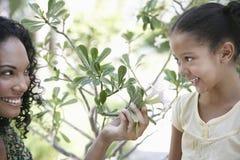 Μητέρα που παρουσιάζει εγκαταστάσεις λουλουδιών στην κόρη Στοκ Εικόνες
