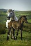Μητέρα & πτηνά Στοκ φωτογραφίες με δικαίωμα ελεύθερης χρήσης
