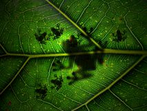 μητέρα φύση Στοκ φωτογραφίες με δικαίωμα ελεύθερης χρήσης