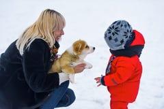 Μητέρα, sonny και κουτάβι του ουαλλέζικου Corgi Στοκ φωτογραφία με δικαίωμα ελεύθερης χρήσης