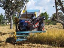 Μηχανή θεριστικών μηχανών για να συγκομίσει την ταϊλανδική εργασία ρυζιού Στοκ εικόνα με δικαίωμα ελεύθερης χρήσης