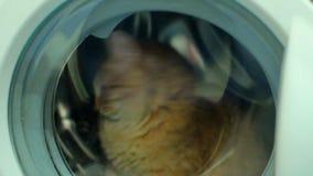 Μηχανή πλυντηρίων και κλειστή άσπρη γάτα απόθεμα βίντεο