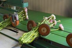 Μηχανή συσσώρευσης λουλουδιών Στοκ Εικόνες