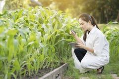 Μηχανικός γυναικών βιοτεχνολογίας που εξετάζει το φύλλο φυτών για την ασθένεια Στοκ Εικόνες