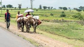 Μη αναγνωρισμένοι αιθιοπικοί άνθρωποι που περπατούν κατά μήκος του δρόμου Οι άνθρωποι στην Αιθιοπία υποφέρουν της ένδειας λόγω τη Στοκ φωτογραφίες με δικαίωμα ελεύθερης χρήσης