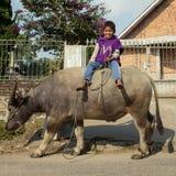 Μη αναγνωρισμένοι ινδονησιακοί βούβαλοι νερού οδήγησης παιδιών Στοκ Εικόνα