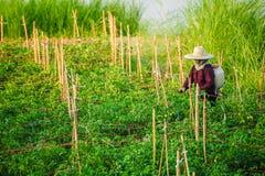 Μη αναγνωρισμένο unsecticide ψεκασμού αγροτών γυναικών στο λαχανικό μακριά στοκ φωτογραφίες με δικαίωμα ελεύθερης χρήσης