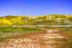 Μη λιθοστρωμένος δρόμος που οδηγεί στα βουνά που καλύπτονται στα wildflowers κατά τη διάρκεια μιας έξοχης άνθισης, Carrizo σαφές  στοκ εικόνες με δικαίωμα ελεύθερης χρήσης
