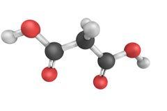 Μηλονικό όξινο, τρισδιάστατο πρότυπο Η ιονισμένη μορφή μηλονικού οξέος, ως wel Στοκ Φωτογραφία