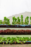 μη τοξικό λαχανικό Στοκ Εικόνα