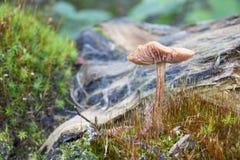 Μη φαγώσιμος μύκητας ενάντια στα απορρίματα Στοκ φωτογραφία με δικαίωμα ελεύθερης χρήσης