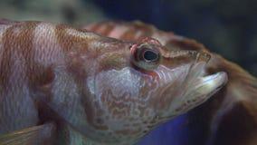 Μια άγρια φύση ψαριών υποθαλάσσια απόθεμα βίντεο