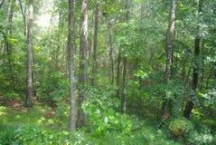 Η πράσινη ζωή στοκ φωτογραφία με δικαίωμα ελεύθερης χρήσης