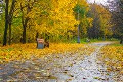 Μια άποψη ενός δρόμου ασφάλτου που σκορπίζεται με τα κίτρινα φύλλα Στοκ Φωτογραφίες