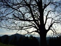 Μια άποψη ηλιοβασιλέματος πέρα από ένα μεγάλο δέντρο στοκ εικόνες