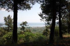 Μια άποψη μεταξύ των δέντρων στοκ εικόνες