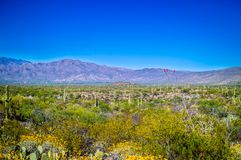 Μια άποψη σκιαγραφιών των βουνών Rincon στο εθνικό πάρκο Saguaro, Αριζόνα στοκ εικόνα