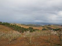 Μια άποψη της περιοχής αμπελώνων Douro στην Πορτογαλία στοκ εικόνα με δικαίωμα ελεύθερης χρήσης