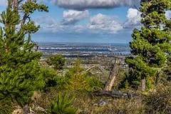 Μια άποψη του Δουβλίνου, Ιρλανδία που πλαισιώνεται από τα κωνοφόρα Στοκ Εικόνα