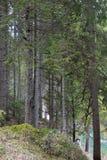 Μια άποψη του καταπληκτικού δάσους γύρω από τη λίμνη Bries, δολομίτες στοκ φωτογραφία με δικαίωμα ελεύθερης χρήσης