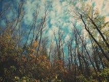 Μια άποψη του ουρανού μέσω των ξύλων στοκ εικόνα