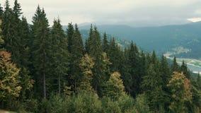 Μια άποψη των δασικών κλίσεων του τοπίου βουνών με τα αειθαλή κωνοφόρα απόθεμα βίντεο