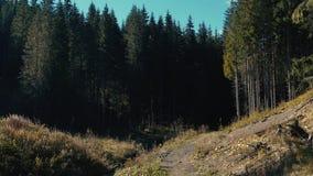 Μια άποψη των δασικών κλίσεων του τοπίου βουνών με τα αειθαλείς κωνοφόρα και τον ποταμό απόθεμα βίντεο
