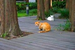 Μια άσπρη γάτα και μια κίτρινη γάτα Στοκ εικόνες με δικαίωμα ελεύθερης χρήσης