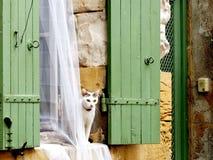 Μια άσπρη γάτα Στοκ φωτογραφία με δικαίωμα ελεύθερης χρήσης