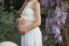 Μια έγκυος γυναίκα στην πρόσφατη εγκυμοσύνη όρου στον κήπο Wisteria στην άνθιση αγκαλιάζει την κοιλιά στοκ εικόνες
