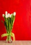 Άσπρα λουλούδια τουλιπών πέρα από το κόκκινο με το διάστημα αντιγράφων Στοκ Φωτογραφίες