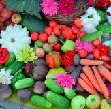 Μια δέσμη των διαφορετικών λαχανικών Στοκ Εικόνες