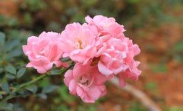 Μια δέσμη των λουλουδιών Στοκ φωτογραφία με δικαίωμα ελεύθερης χρήσης