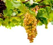 Μια δέσμη των πράσινων φρούτων σταφυλιών Στοκ εικόνα με δικαίωμα ελεύθερης χρήσης