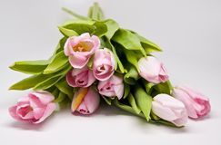 Οδοντώστε τα tulipes Στοκ εικόνα με δικαίωμα ελεύθερης χρήσης