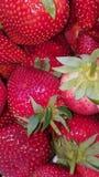 Μια δέσμη των φραουλών Στοκ φωτογραφία με δικαίωμα ελεύθερης χρήσης